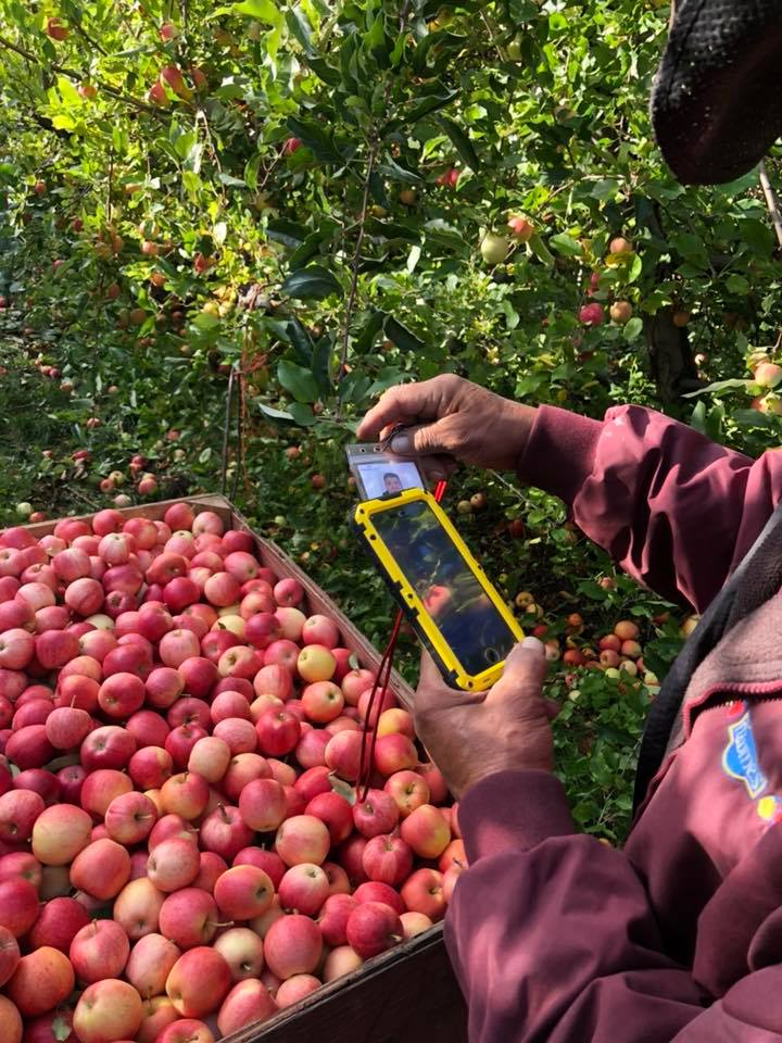 Scanning apples through the FieldClock app