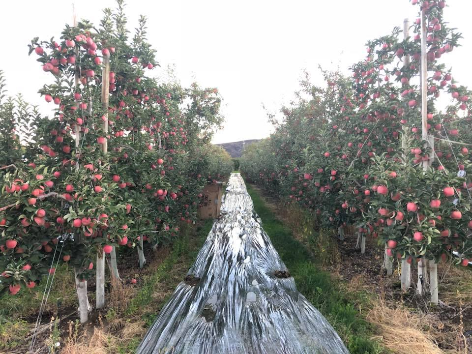 We get to work in some beautiful places such as green apple orchards